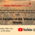 Online Sunday Worship 'The Parable of the Wheat and Weeds'  – 19th July 2020